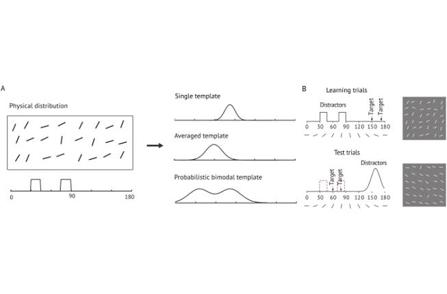 Collegamento a Probabilistic templates in visual working memory