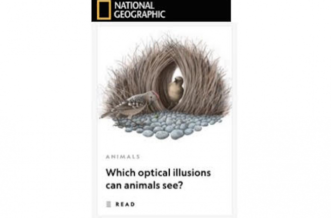 Collegamento a Lo studio delle illusioni ottiche degli animali: servizio del National Geographic
