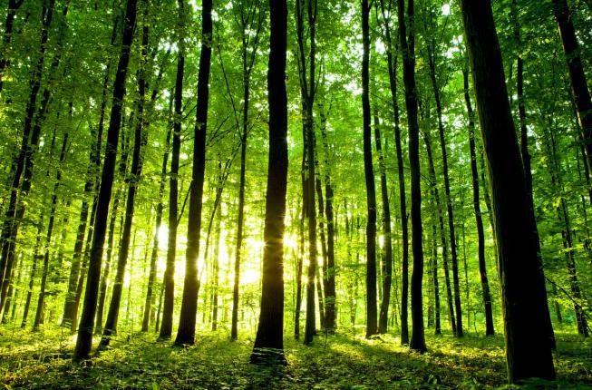 Collegamento a Cognizione nelle piante e loro aspetti sul benessere